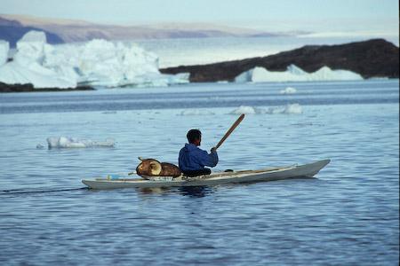chasse traditionnelle au narval par les Inuits