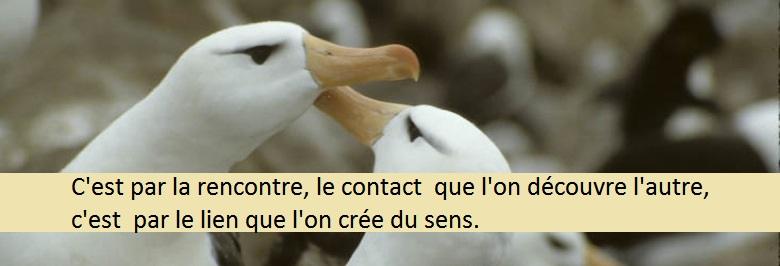 bandeau contact