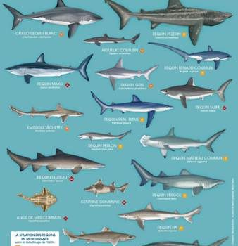 RequinMed PosterRequins A FR BD web